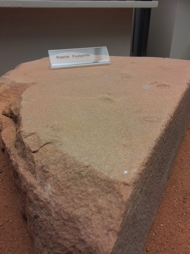 Triassic Reptile Footprints